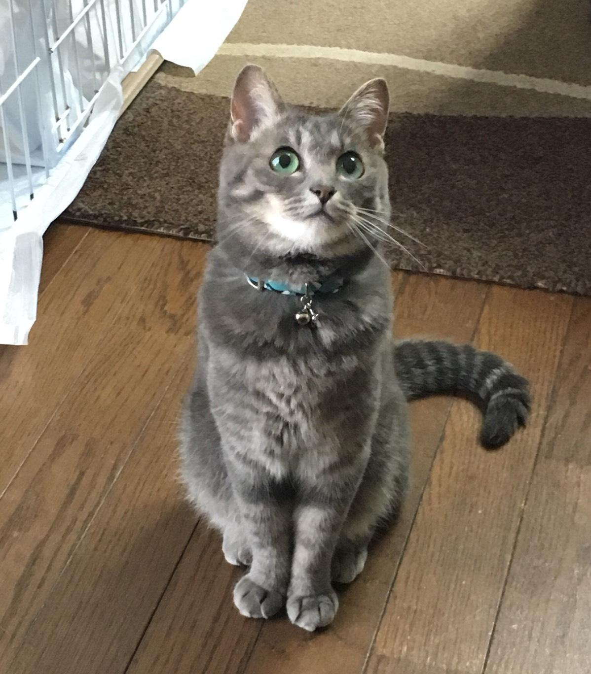 ルミさんの猫ちゃん